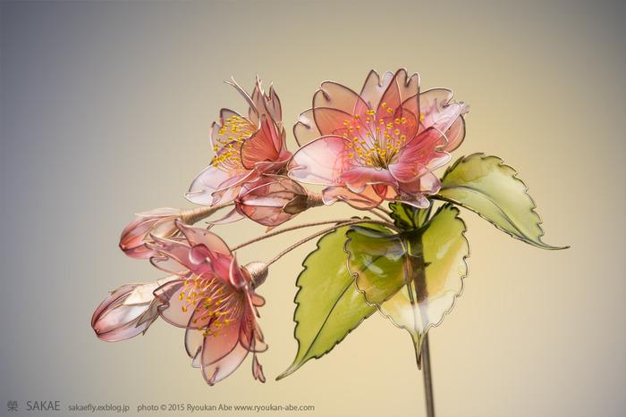 こちらはさらにゴージャスに光を放つ八重桜。花びらの数が多い分、ぽってりとした厚みを感じます。 Photo by Ryoukan Abe (www.ryoukan-abe.com)