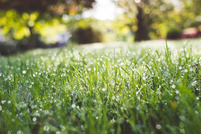 【踏青(とうせい)】野に出て青々した草を踏み、野遊びをすること。いわゆるピクニック。【野遊(のあそび)】という季語も。/【摘草(つみくさ)】野原などで草花を摘むこと。食べられる草を摘むこともあります。万葉の時代から貴賤を問わず続く春の遊びのひとつ。