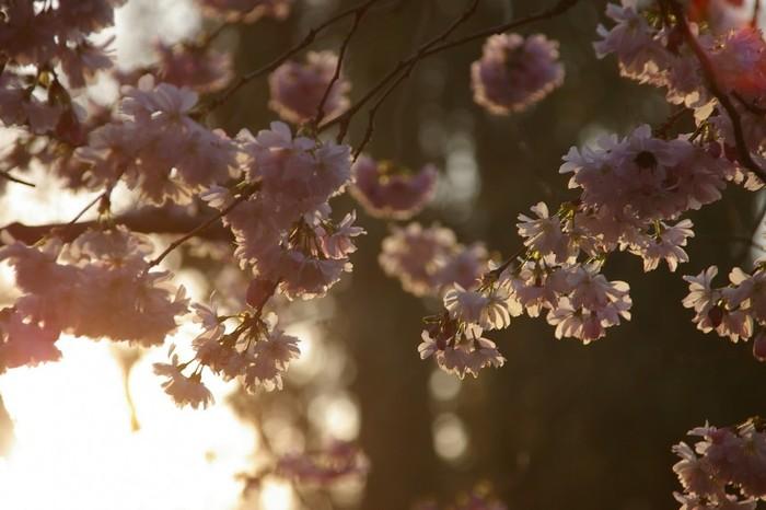 【桜】俳句で【花】といえば桜のこと。/【花曇(はなぐもり)】桜の咲くころ、曇りがちなのをいいます。/【花冷(はなびえ)】桜の咲くころ、まだ寒い様子。/【日永(ひなが)】冬の後では春が一番日の長さを実感するため、俳句では日長といえば春とされます。