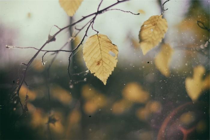【冬構(ふゆがまえ)】田畑や庭木の作物を囲ったり、雪囲いをしたり、寒冷をふせぐための工夫をすること。/【神の留守】旧暦10月には神々が出雲の国に旅立つという言い伝えから出ています。/【時雨(しぐれ)】初冬に降ったり止んだりする雨のこと。