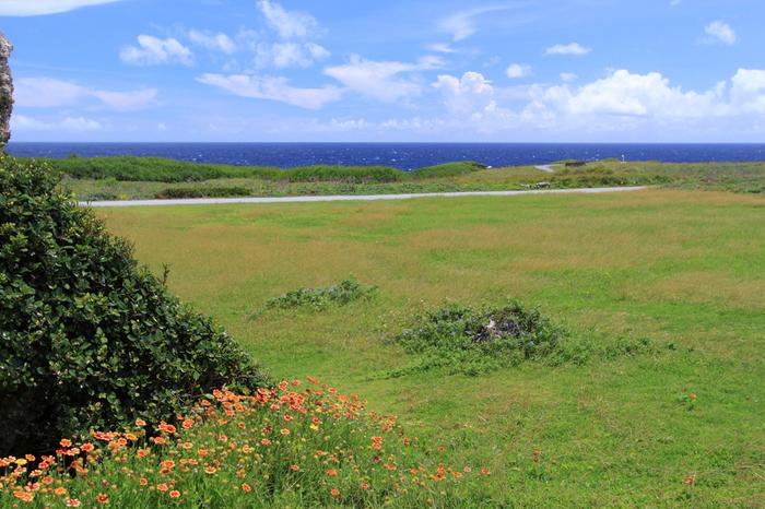 岬一帯は多くの植物と緑にあふれています。これも見どころの一つですね^^