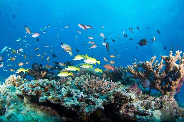 色とりどりの魚と珊瑚が美しい海の中は、まるでおとぎの世界のよう。