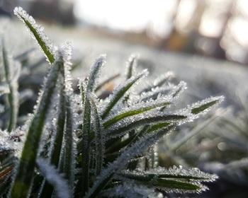 【初霜】その年の初めて降りる霜。/【冬暖(ふゆあたたか)】冬とも思えないほど温かな日のこと。/【冬日和(ふゆびより)】晴れた冬の日のこと。/【北窓塞ぐ(きたまどふさぐ)】冷たいすきま風が吹き込むのを防ぐため、北窓を閉じたり目張りをしたりすることをいいます。