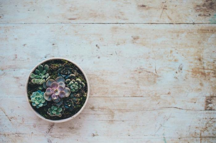 小さな観葉植物を部屋に飾るだけでもお部屋の雰囲気が変わります。グリーンに癒されたり、種類によっては空気の清浄をしてくれる植物も。