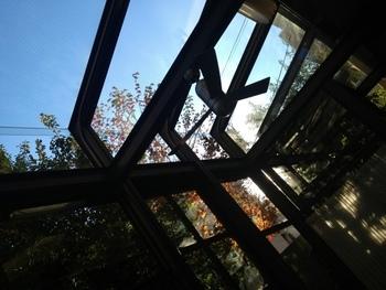 テラス席のすぐ横には紅葉に染まった木々たちが♪