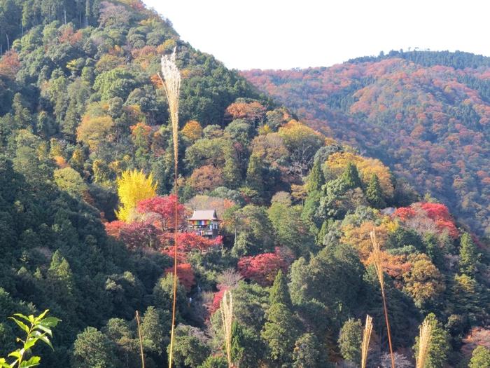 """嵐山の中腹に佇む「大悲閣 千光寺(だいひかく せんこうじ)」は、嵐山の隠れた名所。(「大悲閣」とは、""""山の上の観音堂""""という意味。)"""