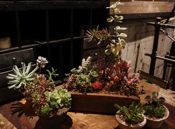 アンティーク家具や雑貨、個性的な多肉植物などを取り扱っています。