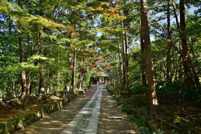 「寿福寺」の素晴らしさは、何と言ってもこの総門から山門へと続く石畳の参道です。 (※山門は、普段は開いていません。正月三ヶ日、特別拝観日のみ立ち入ることができます。山門内の「仏殿」の拝観や庭を鑑賞したい方は三ヶ日に。)