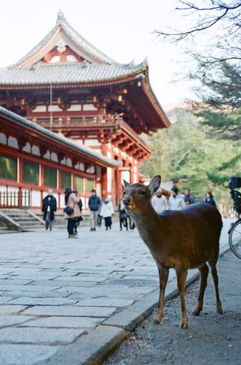 のんびり、ゆったり。春の奈良旅をご案内します♪