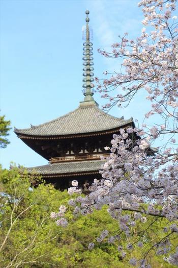 世界遺産・興福寺は奈良を代表する寺院のひとつで、最盛期には寺の建物の数が175もあったそうです。有名な五重塔を始め、東金堂や南円堂など国宝指定の建物が4件、重要文化財指定の建物が1件と見応えも盛りだくさん。薪御能(たきぎおのう)や節分の鬼追いなど、いにしえの伝統行事も今に伝えています。