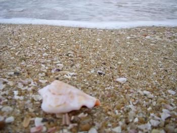 伊王島を訪れた人たちが、真っ先に感動するのが海の透明度。運がよければ小さなお魚さんたちも鑑賞できますよ。