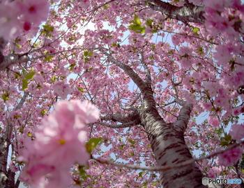 お花を見ると少し心が癒やされる気がしませんか? 四季折々の花々は私達にパワーを与えてくれます。 同じ景色には二度と会えない、関東近郊の絶景【花】スポットをご紹介します♪