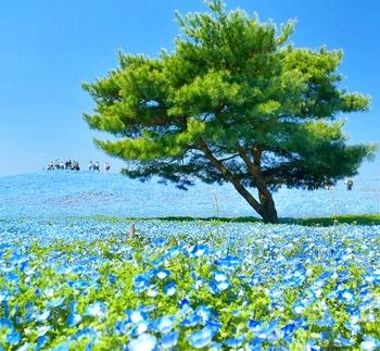 いかがでしたか? 意外と近くに素敵なお花畑がたくさんありました。 四季折々の花々が行くたびに違う風景を見せて楽しませてくれる絶景【花】スポットに是非足を運んでみては?