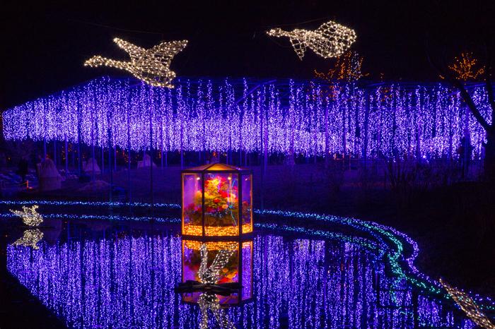 1年に8つのテーマをつくり、四季折々に数多くの花々が美しさを競っています。 関東三大イルミネーションにも選ばれた 「光の花の庭」 も人気です(10月下旬より開催)。