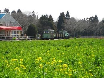 春には「千葉県の花」菜の花が満開になり、黄色の世界が広がります。 桜の時期には夜桜がライトアップされます。