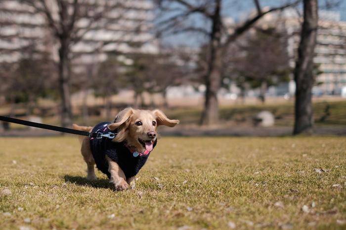 都内には、わんちゃんOKのカフェがたくさんあります。いつもお散歩だけだった方も、たまにはこうしたカフェに寄ってみてはいかがでしょう。気分転換になったり、犬好きさんのお友達が出来たりと、きっと良いこと尽くしですよ♪