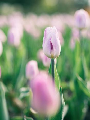 もうすぐぽかぽか気持ちのいい春がやってきます。お花見やピクニック、ドライブに出かけることも多くなる季節。定番のデニムアイテムは、外出時にも使いやすく、春色が広がる景色にもぴったり!今回は、きっとあなたに似合う春デニムコーディネートをご紹介していきます♪