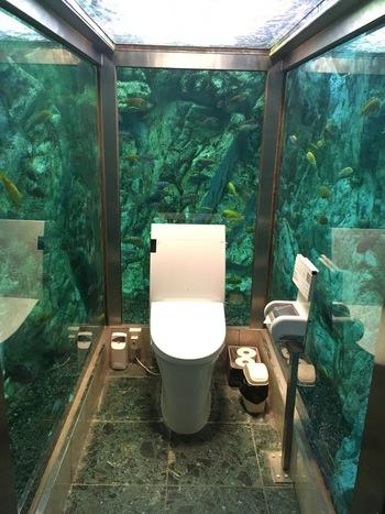 このお店のもう一つの目玉が女性トイレが水族館になっていること!たくさんの熱帯魚や亀が泳いでいます。とても不思議な空間に、誰しも驚くはず。