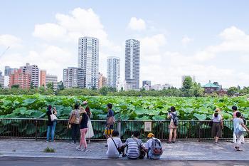 広い池には明鏡蓮・蜀紅蓮・浄台蓮・不忍池斑蓮・大賀蓮(日本で発見された古代蓮)の計5種類の蓮が植えられています。野外ステージ近くには、新しくデッキが作られ、蓮の種類ごとに分かれた「蓮観察ゾーン」から間近で綺麗な花をじっくり鑑賞できるようになりました。