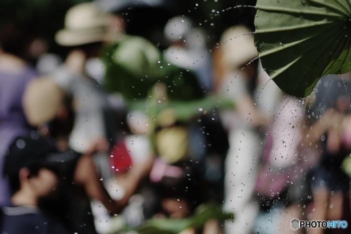 早朝観蓮会では蓮葉のシャワーや茎の糸取り体験、葉っぱのお面作りなど子供も楽しめるユニークなイベントもあります。ご家族揃ってぜひ参加してみてくださいね♪
