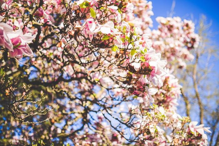 今年の春にさっそく取り入れてみたい「春デニム」アイテムは見つかりましたか?こちらに掲載したアイテムやコーディネートはほんの一部。是非あなただけの春デニムコーデを見つけて、素敵な着こなしを楽しんでくださいね♪
