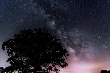 """画像は""""セブンスターの木""""。  この""""セブンスターの木""""は、美瑛の丘の頂上付近に立つ、有名なカシワの木。タバコのパッケージに使われたことから、この名が付いています。"""