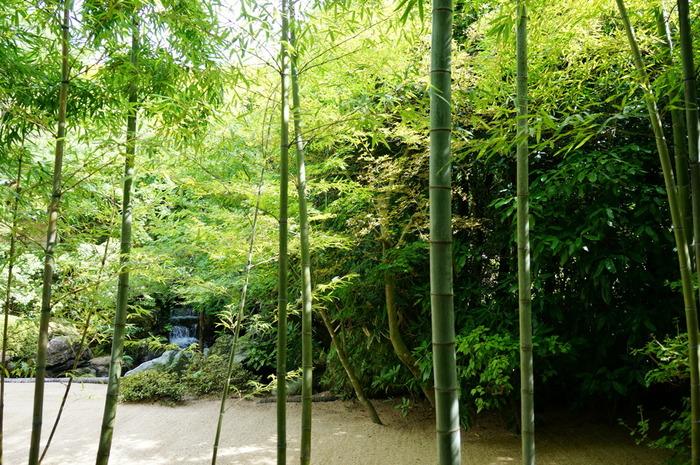 それは、近代日本画のコレクションで名高い「足立美術館」の日本庭園。
