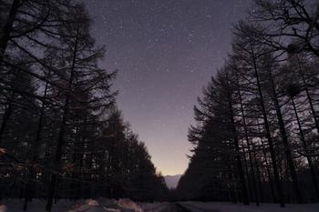 南牧村で撮影された星空。  林の上空に広がる、星・星・星…。  ため息も、星も零れそうな夜空。