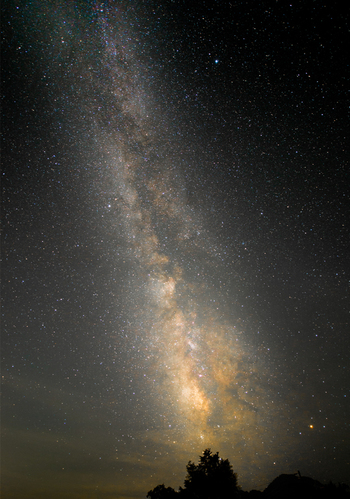 妙高高原で撮影された、木々に降り注ぐような星空の画像です。素晴らしいですね。