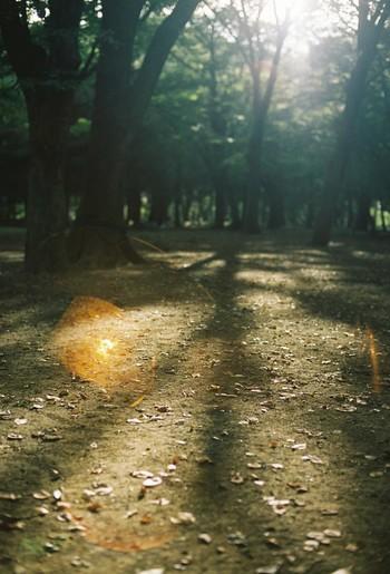 こうして撮影すると、光を捉えたような気になれますね♪