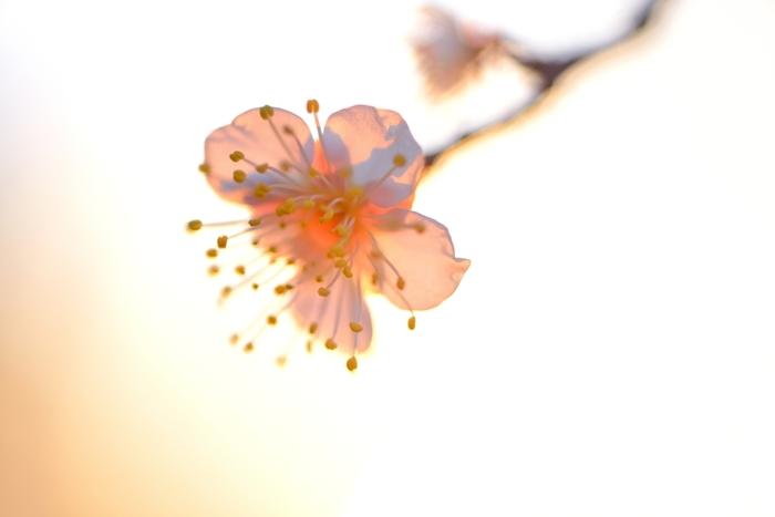 『マクロレンズ』を使用したもの。花弁の細部まで映し出されています。
