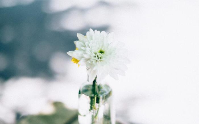 癖がなく万人に受け入れられる「白色」。