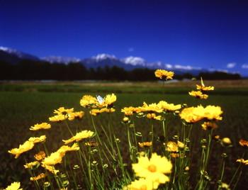 子供の頃、蝶々を追いかけていた夏。そんな懐かしい風景に出会えそう。