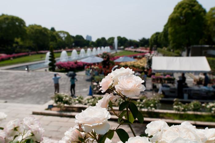 まるでヨーロッパのような、ステキなバラ園。入園料は大人400円と有料です。