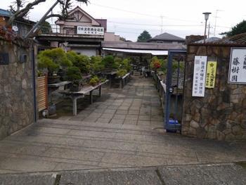 様々な盆栽園が大きいものから小さいものまで、盆栽の販売や盆栽教室を行っています。こちらは藤樹園。