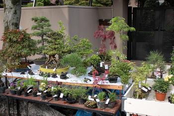 大小さまざまな種類の盆栽が並び、見て回るだけでもとっても楽しそう!