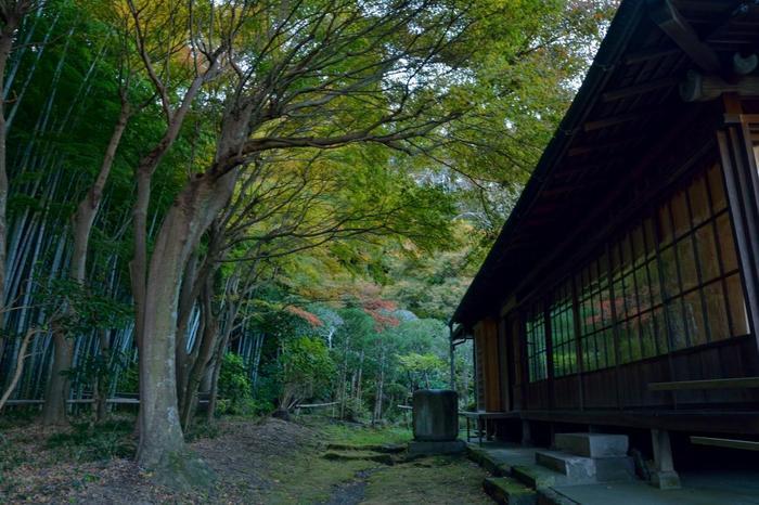 境内には一年を通じて、花が季節折々に咲き開き、裏手には回遊できる竹林もあります。