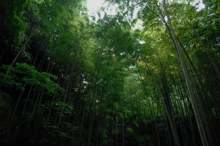 鎌倉の竹林といえば「報国寺」が有名ですが、英勝寺の中庭の竹林も良いものです。ぜひ周りましょう。