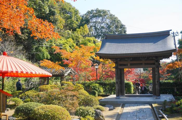 秋に萩、晩秋の紅葉に彩られる、海蔵寺の山門。