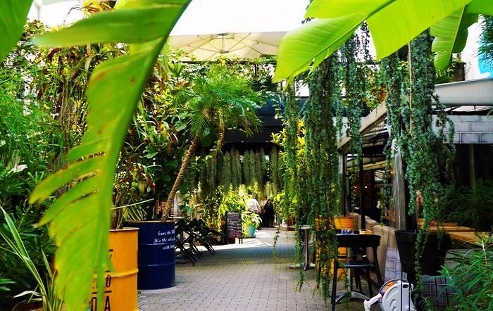 総面積650坪あまりのこぢんまりした敷地に、120種類にも及ぶ世界中の珍しい植物たちが集められ、遊歩道でそれぞれのお店に繋がっています。植物のすぐ近くには、それぞ、どのような植物かを解説するパネルが添えられ、ラテン語の学名も記載されています。