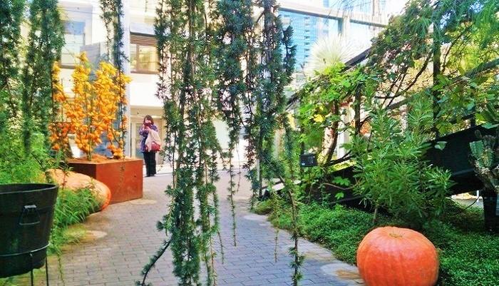 ハロウウィンの時期は、直径1メートルちかいお化けかぼちゃがゴロゴロ…。左後方の黄色い実のなる木はフォックスフェイス(ブラジル原産)。