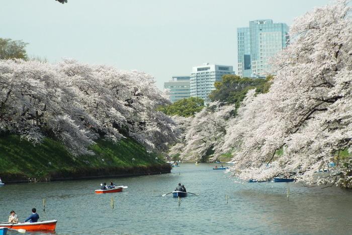 半蔵門から田安門までのお堀にある桜のスポットが、こちらの千鳥ヶ淵公園です。半蔵門、九段下駅から各5分程で訪れることができます。ボートに乗って桜見物もでき、夜桜もとっても綺麗なんです。