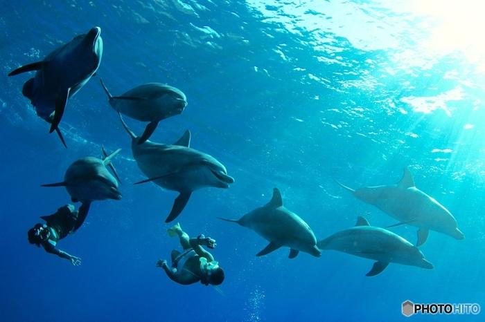 こうしてイルカと一緒に泳ぐことができるかも。一生の思い出になりますね。