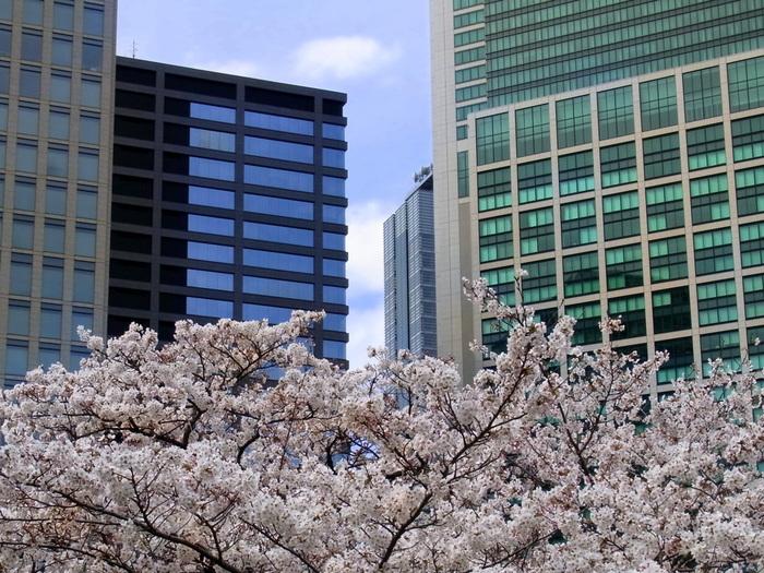 ソメイヨシノが3月末から4月初旬から咲き始め、4月中旬から八重桜が咲き始めます。その他にも珍しい品種の桜も楽しむことが出来る貴重な都内の庭園です。