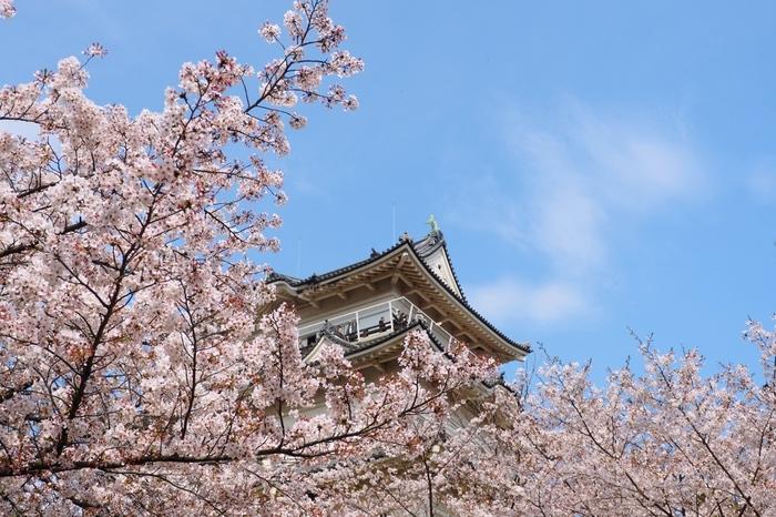 小田原駅から徒歩約10分のところにある小田原城址公園は、わざわざ足を運んで見に行きたい桜の名所で、日本さくらの名所100選にも選ばれています。