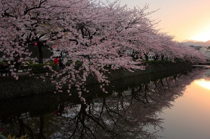 お城の周りやお堀など、約1000本の桜はとっても素晴らしく、日本に生まれてよかったと思えるほどです。桜は3月末から4月下旬が見頃です。お城と桜、お堀の水面に写る桜など、素敵な写真スポットもあるので、カメラ片手に是非訪れてみてはいかがですか?お城と桜のコントラスト、日本らしくてとっても素敵です。