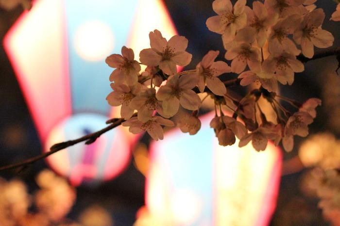 埼玉県初の県営公園として誕生した大宮公園には、約1200本もの桜があります。こちらも日本さくらの名所100選に選ばれており、最も桜が多く植えられている自由公園では、シートを敷いてのお花見が堪能できるんです。