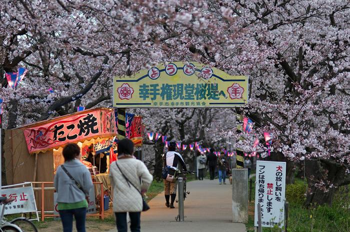 桜のトンネルには、出店もあったり、お花見気分を存分に味わうことができますよ。