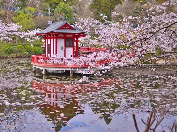 公園内にある、弁天湖と、朱色がとても綺麗な弁天堂がとっても鮮やか。桜のピンクと弁天堂の朱色のコントラストも美しいです。毎年4月上旬にはさくらまつりも開催されています。是非チェックしてみてくださいね。