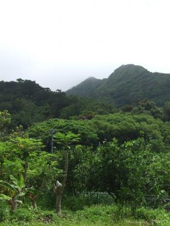 母島には父島より高い山があります。一番高い山は乳房山という山。 登ると母島の観光協会で立派な記念証がもらえるんだとか。